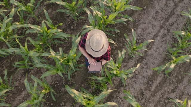 vídeos y material grabado en eventos de stock de aerial agricultor femenino que utiliza una tableta en un campo - drone footage