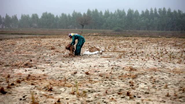 Female farmer working in the field during winter season video