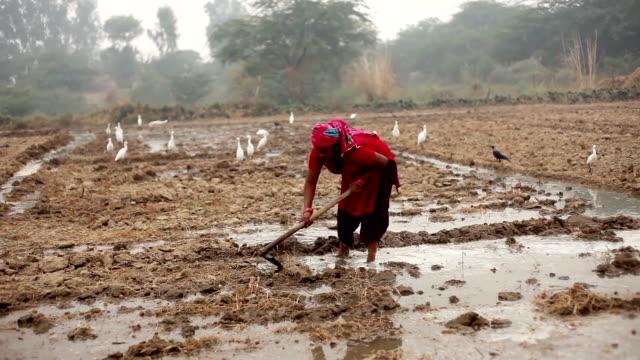 vídeos de stock e filmes b-roll de female farmer working in the field - agricultora