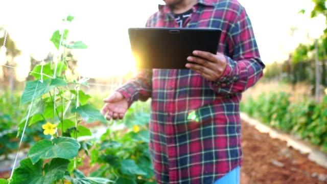 sebze bahçesinde kadın çiftçiler - bahçe ekipmanları stok videoları ve detay görüntü çekimi