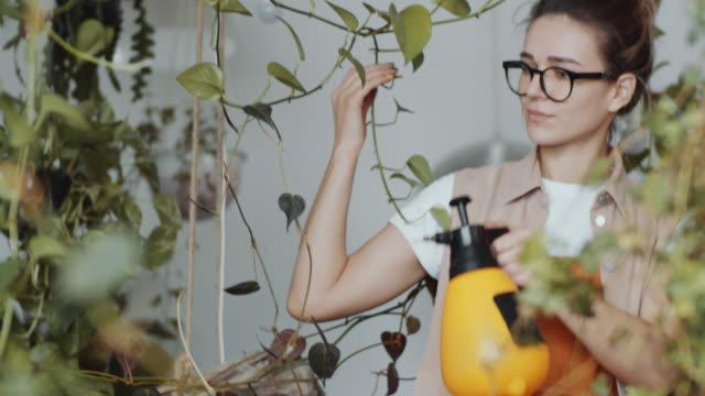 vidéos et rushes de plantes de brume de fleuriste femelle dans le magasin d'usine d'usine - botanique