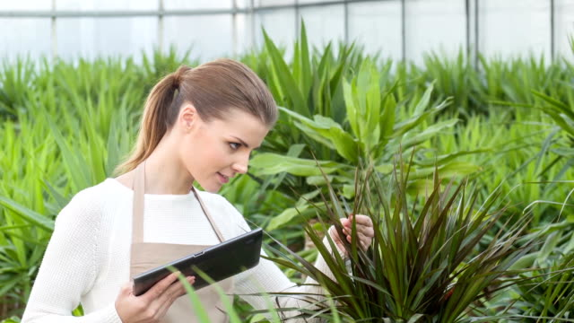 Female florist stops and checks growing plant video