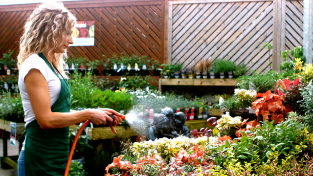 Female florist watering plant with water hose video