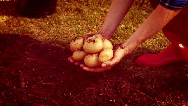 Female gardener showing potatoes in the park