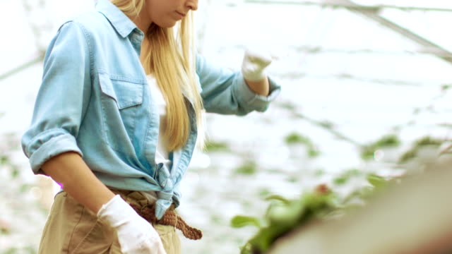 Female Gardener Wipes the Sweat from Her Forehead while Working with Plants in a Sunny Industrial  Greenhouse. She's Little Bit Tired and Exhausted after Long Working Day. video