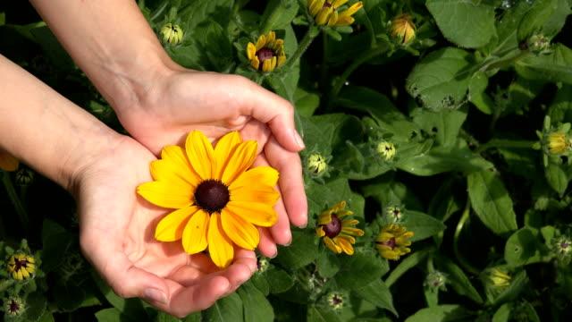 Female girl show rudbeckia flower bloom hidden in arms. 4K