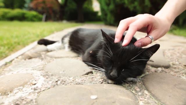 vídeos de stock e filmes b-roll de a female hand caresses a sleeping black cat in the garden - felino