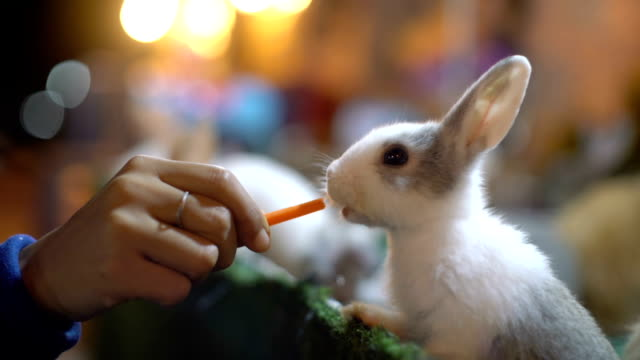 Female hand feeding rabbit with carrot close-up Female hand feeding rabbit with carrot close-up carrot stock videos & royalty-free footage