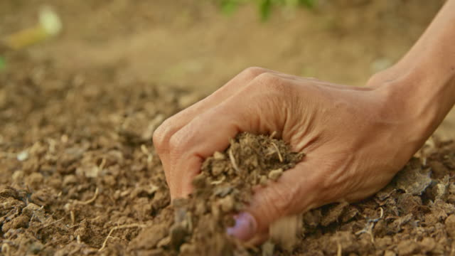 Female hand grabbing garden soil to check the quality