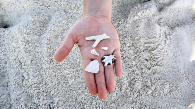 Female hand holding seashells. Beach holiday Close up on hand with seashells animal shell stock videos & royalty-free footage