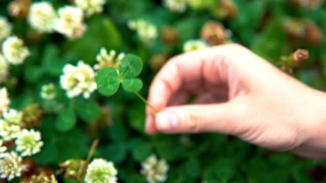 vidéos et rushes de une main féminine tient un symbole trèfle à quatre feuilles de chance. - bonne chance
