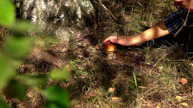 kvinnliga handplockar boletus svampodling under björken - höst plocka svamp bildbanksvideor och videomaterial från bakom kulisserna