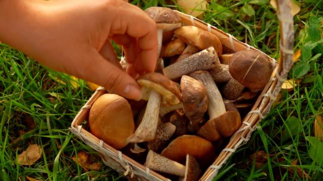 kvinnlig hand sätter svamp i en korg - höst plocka svamp bildbanksvideor och videomaterial från bakom kulisserna