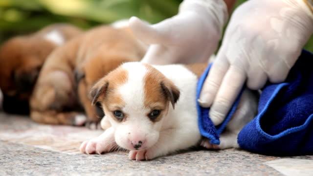 femmina mani lavaggio cucciolo cane - gommapiuma video stock e b–roll