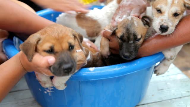 Female hand washing puppy dog video