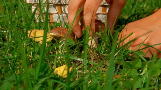 kvinnlig hand med en kniv klipper svampen - höst plocka svamp bildbanksvideor och videomaterial från bakom kulisserna
