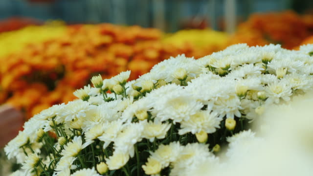 Female hands adjust flowers in a large bouquet. Work in the shop or flower nursery, close-up video