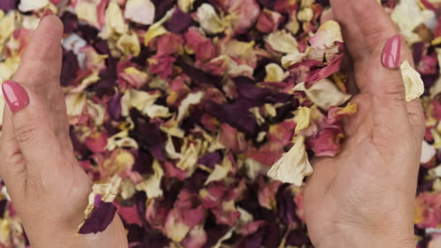 Female hands hold dry rose petals in their palms and threw on a heap of dry rose petals. Dry petal rose
