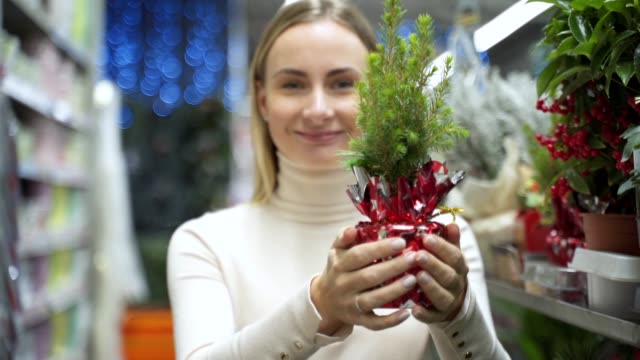 Female hands holding a small Christmas tree Celebrate Christmas on December 25 every year