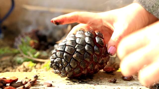 kvinnliga händer plockar upp en pinjenötter i en kottar - pinjenöt bildbanksvideor och videomaterial från bakom kulisserna