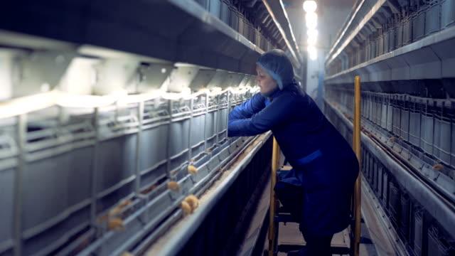 vídeos de stock, filmes e b-roll de galinheiro feminino trabalhador está tirando várias galinhas das suas células - ave doméstica