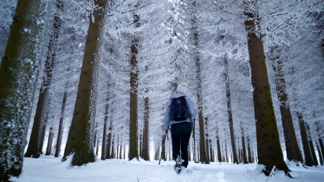 Female hiker walking in winter forest Young woman with hiking poles walking in majestic snowy forest. pine tree stock videos & royalty-free footage