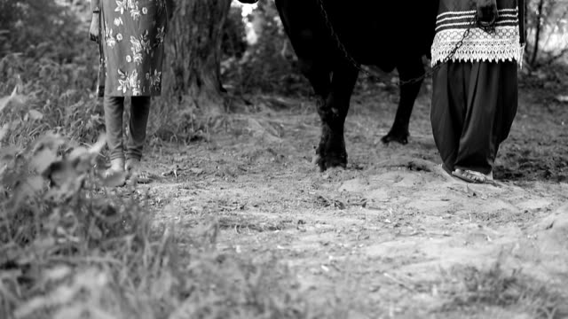 Female Indian farmer & her daughter with their cattle - video