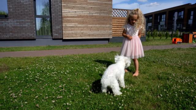 Female kid feeding white bichon dog pet in house yard. Gimbal movement