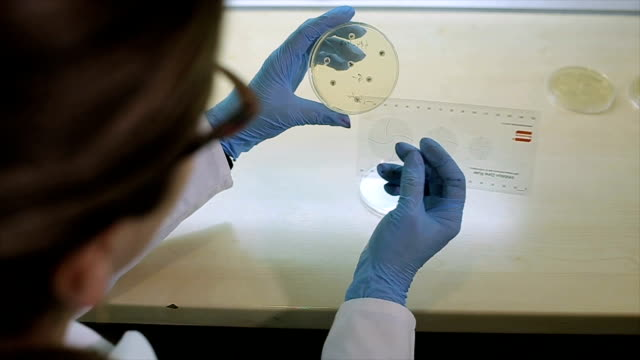 medico microbiologico femminile in laboratorio,lavoro con antibiogramma - antibiotico video stock e b–roll
