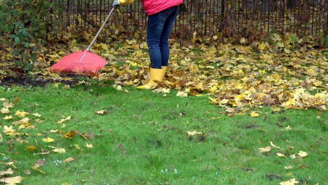 female rake dry autumnal leaves with rake in own garden. FullHD video