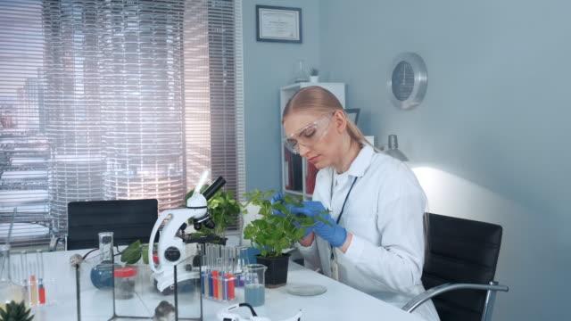 vídeos de stock, filmes e b-roll de cientista de pesquisa fêmea em vidros protetores que examinam folhas da planta com pinças - amostra científica