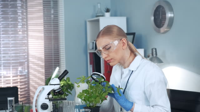forscherin, die pflanzen unter lupe betrachtet - wissenschaftlerin stock-videos und b-roll-filmmaterial