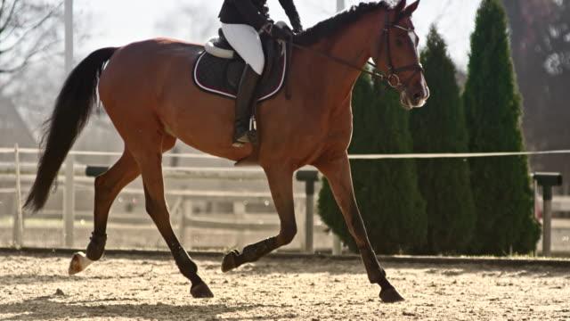 slo mo ts kvinnlig ryttare rider sin häst i den soliga arenan - racehorse track bildbanksvideor och videomaterial från bakom kulisserna