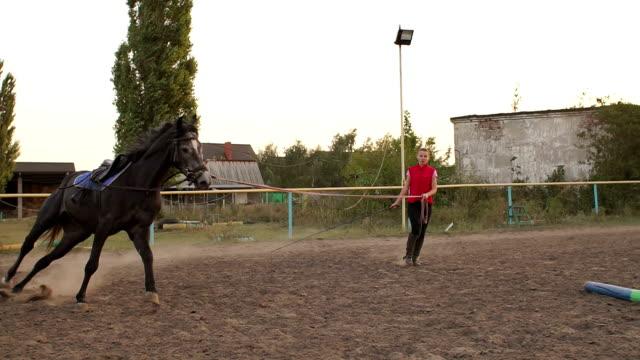 女性ライダーは、競馬場で馬を列車します。 - 動物に乗る点の映像素材/bロール