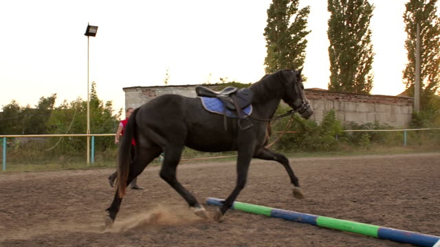 Female rider trains a horse at a racetrack. video