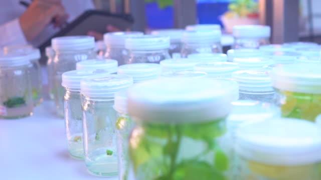 Female Scientist in Tissue Culture Modern Laboratory