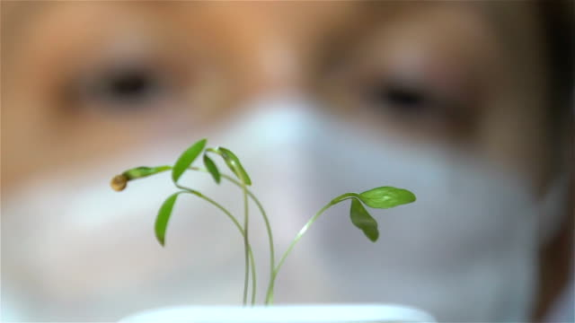Female scientist looking at a small sprout in the laboratory. Slow Motion video