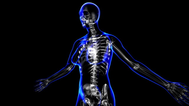 Female skeleton Transition body - female skeleton - body. Loop animal skeleton stock videos & royalty-free footage