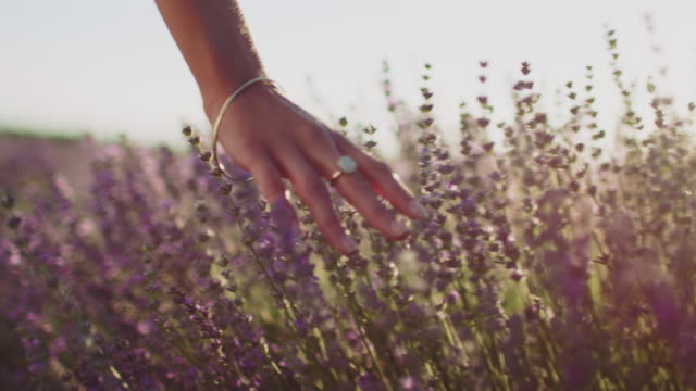 vídeos de stock e filmes b-roll de female touching lavender flowers in farm - lavanda planta