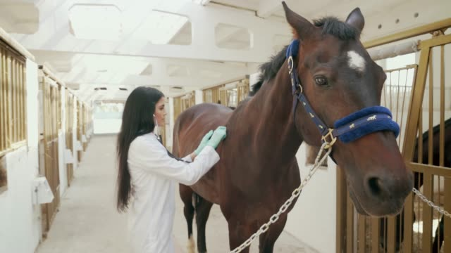kvinnlig veterinär examen häst med stetoskop. - veterinär, undersökning bildbanksvideor och videomaterial från bakom kulisserna