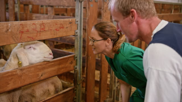 Female veterinarian making notes while talking to caretaker and observing the sheep video