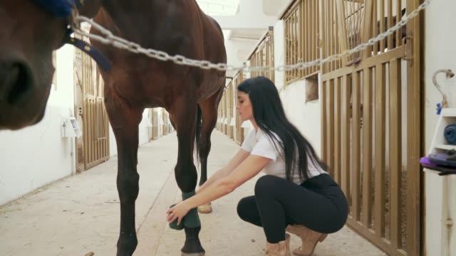 veterinaria donna che mette benda sulla gamba di cavallo. - stallone video stock e b–roll