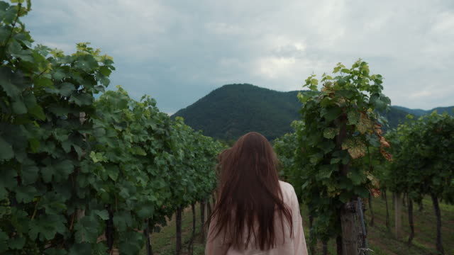 female visitor of vineyard is walking between shrubs - vídeo