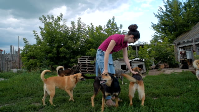 female volunteer in dog shelter playing with dogs
