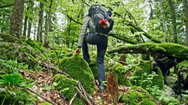 TS Female wilderness survival expert walking up the mossy rocks in the forest