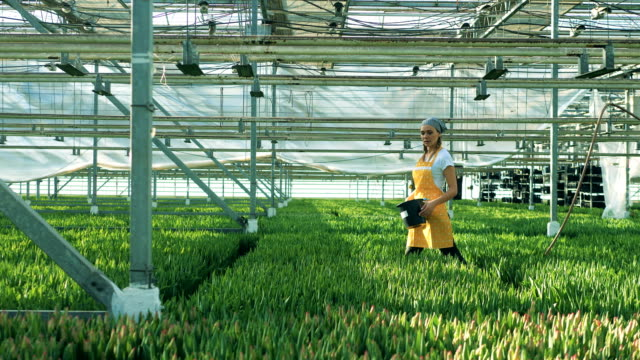 Female worker is walking along the greenhouse with flowers