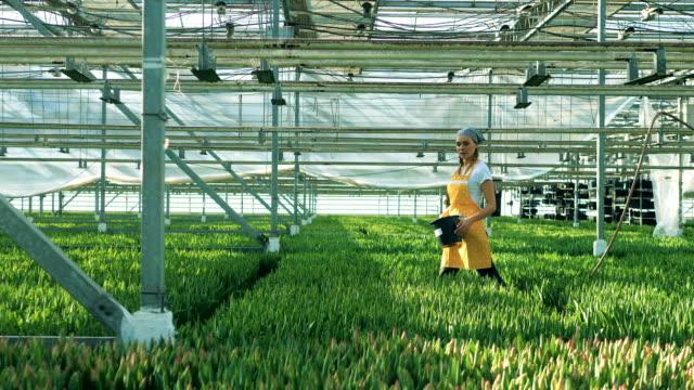 La travailleuse marche le long de la serre chaude avec des fleurs - Vidéo