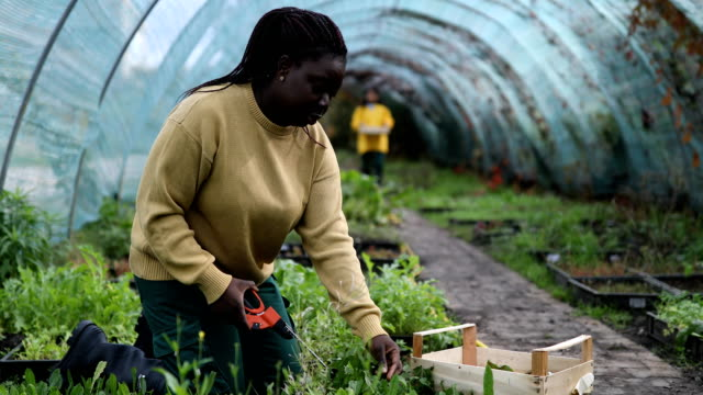 Females working in an organic farm