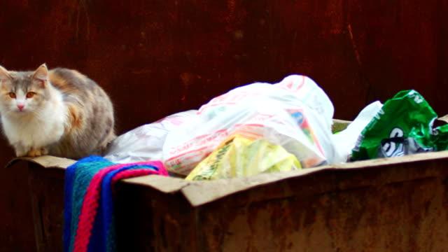 vídeos de stock e filmes b-roll de feral calico cat on trash can - lata comida gato