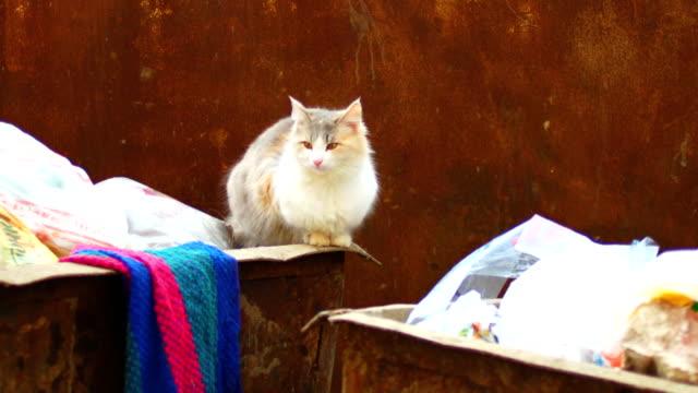 vídeos de stock e filmes b-roll de feral cat on trash can looking at camera - lata comida gato